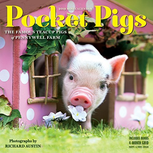 Pocket Pigs Mini Wall Calendar 2019: The Famous Teacup Pigs of Pennywell Farm