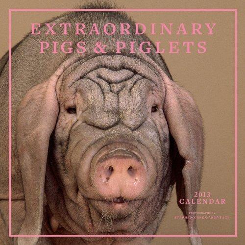 Extraordinary Pigs 2013 Wall Calendar