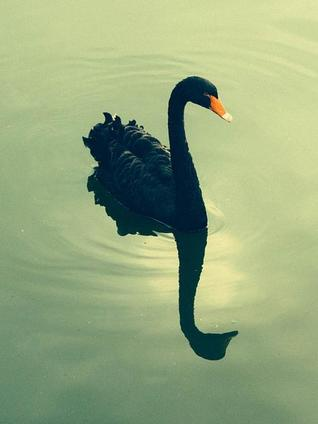 Key insights from The Black Swan