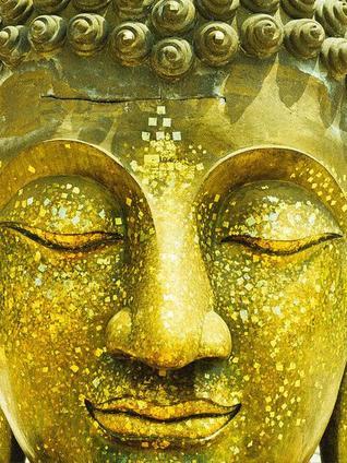 Key insights from Buddha's Brain