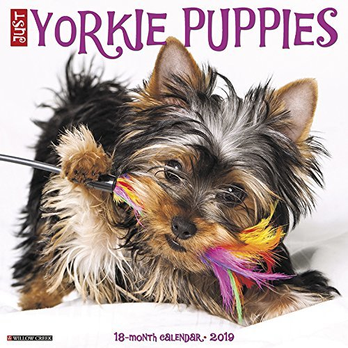 Just Yorkie Puppies 2019 Wall Calendar