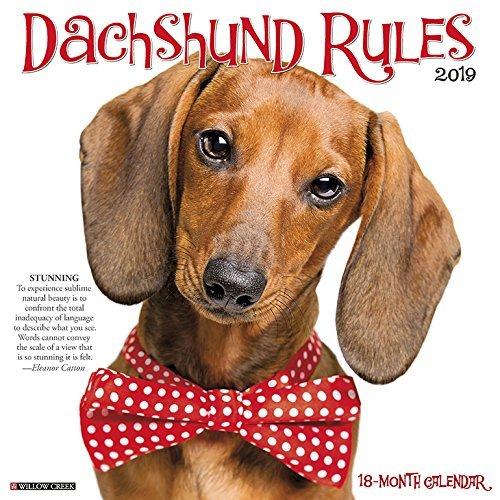 Dachshund Rules 2019 Wall Calendar