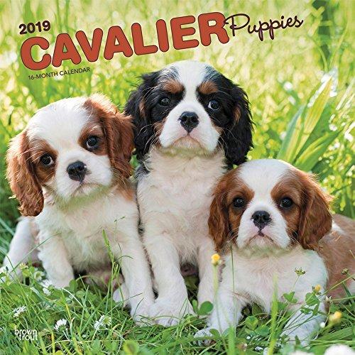 Cavalier King Charles Spaniel Puppies 2019 Square Wall Calendar
