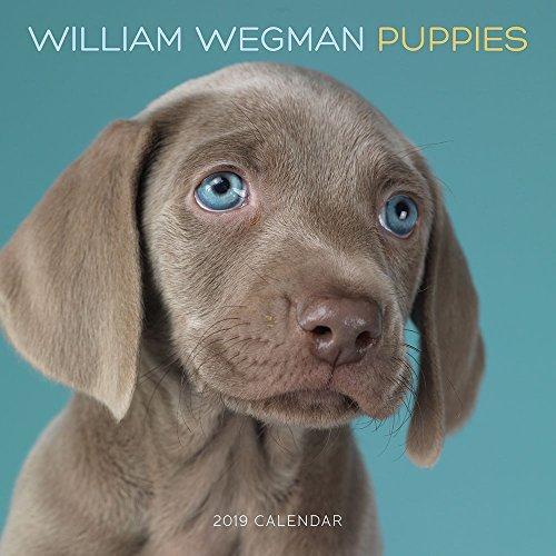 William Wegman Puppies 2019 Wall Calendar