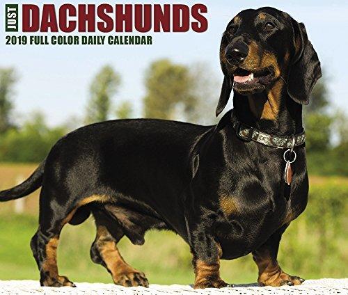 Just Dachshunds 2019 Box Calendar
