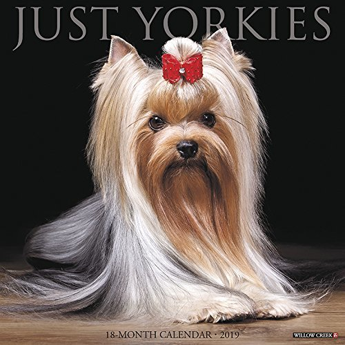 Just Yorkies 2019 Wall Calendar