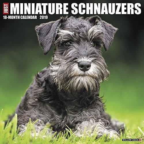 Just Miniature Schnauzers 2019 Wall Calendar