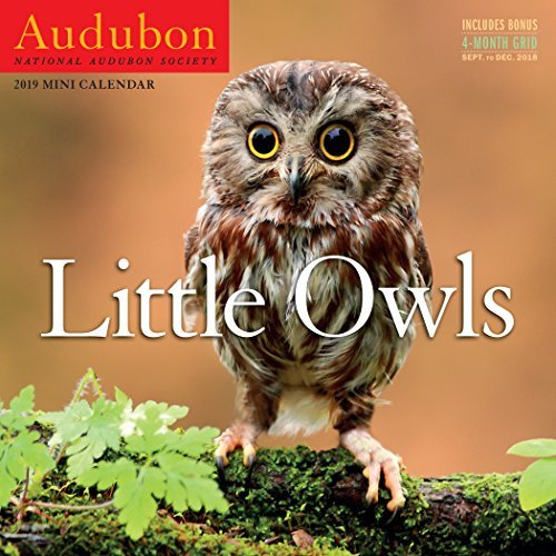 Audubon Little Owls Mini Wall Calendar 2019