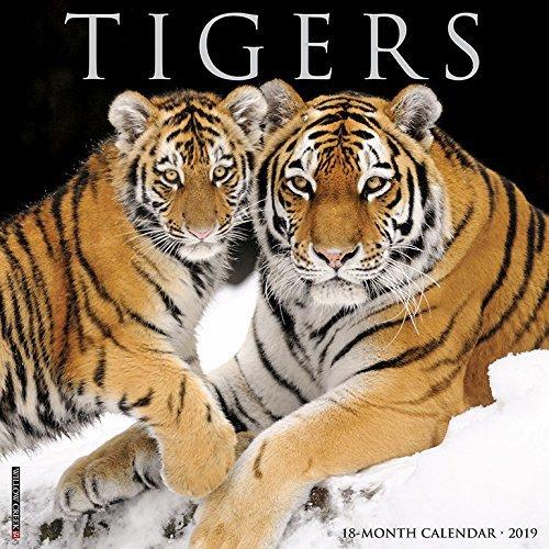 Tigers 2019 Wall Calendar