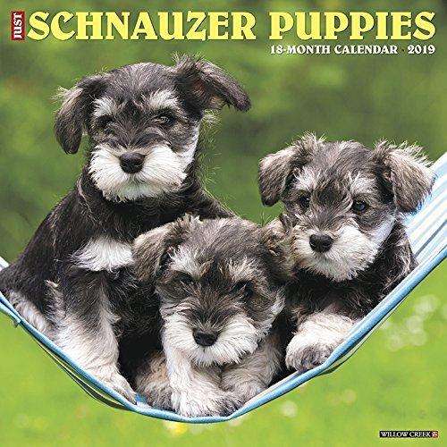 Just Schnauzer Puppies 2019 Wall Calendar