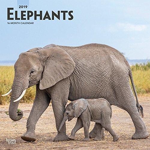 Elephants 2019 Square Wall Calendar