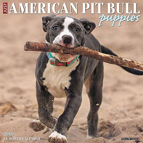 American Pit Bull Terrier Puppies 2019 Wall Calendar