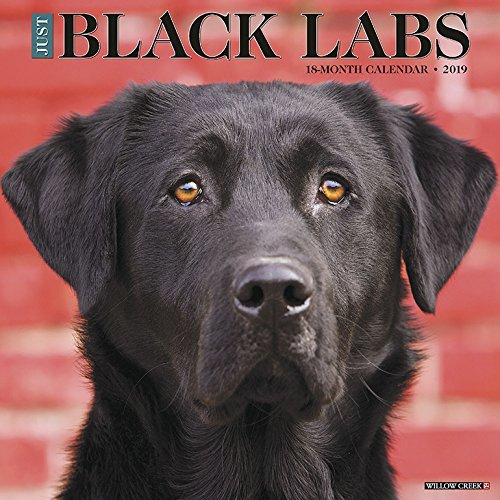 Just Black Labs 2019 Wall Calendar