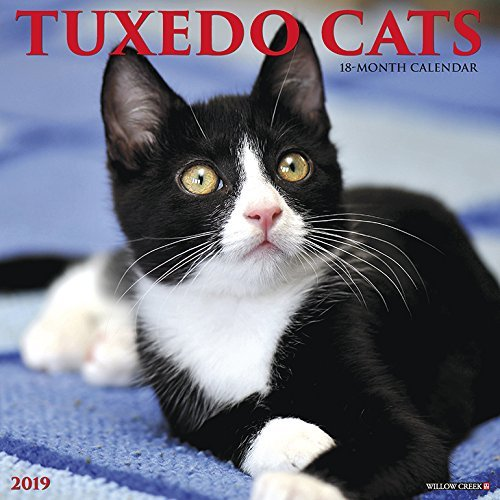 Just Tuxedo Cats 2019 Wall Calendar