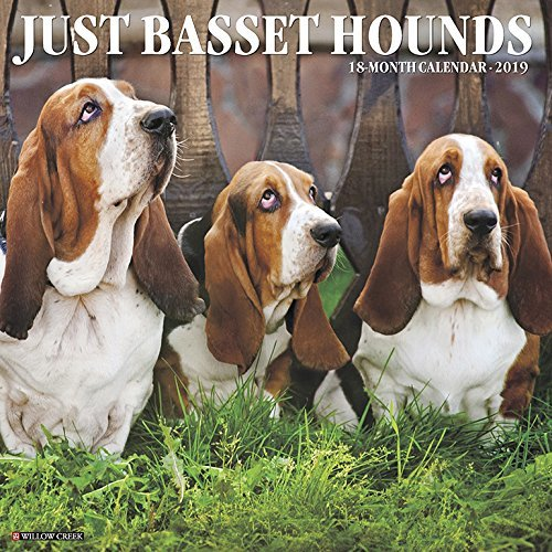 Just Basset Hounds 2019 Wall Calendar