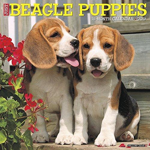 Just Beagle Puppies 2019 Wall Calendar
