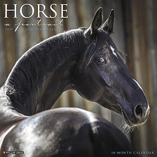 Horse: A Portrait 2019 Wall Calendar