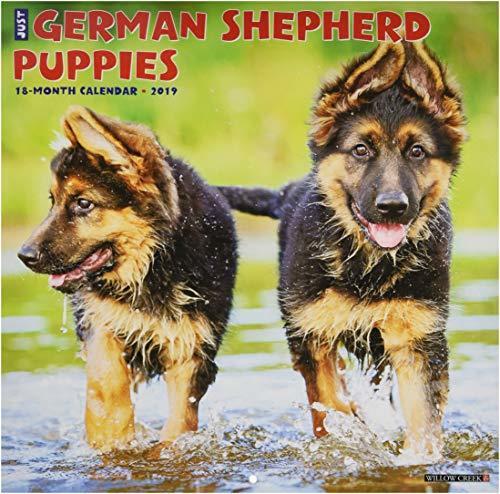 Just German Shepherd Puppies 2019 Wall Calendar