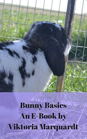 Buny Basics: Caring For New Bunny