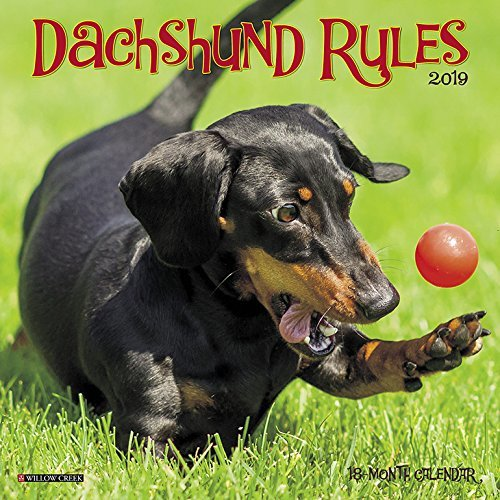 Dachshund Rules Mini 2019 Wall Calendar