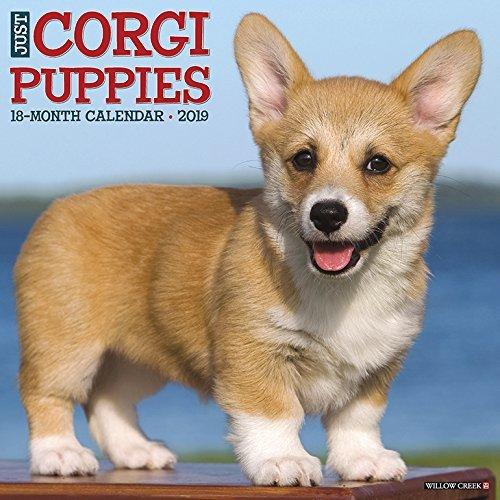 Just Corgi Puppies 2019 Wall Calendar