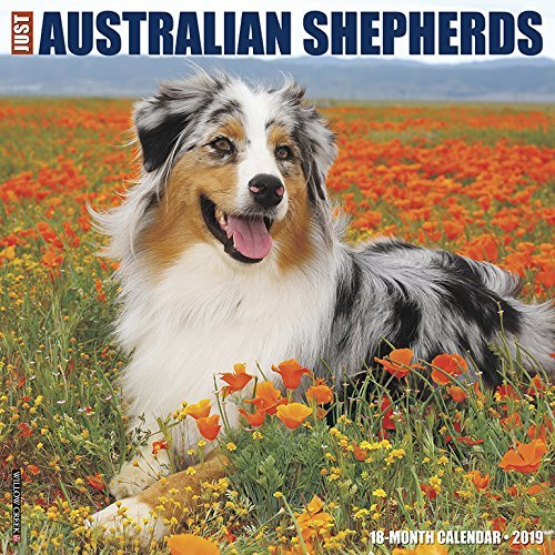 Just Australian Shepherds 2019 Wall Calendar