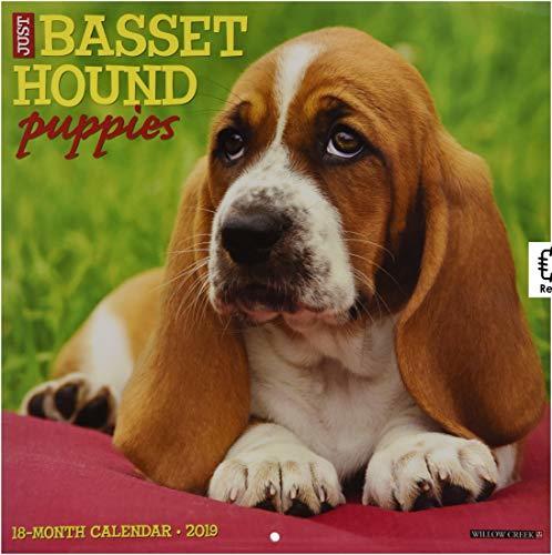 Just Basset Hound Puppies 2019 Wall Calendar