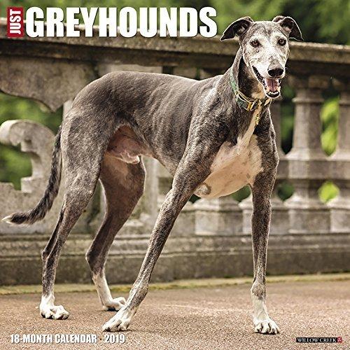 Just Greyhounds 2019 Wall Calendar