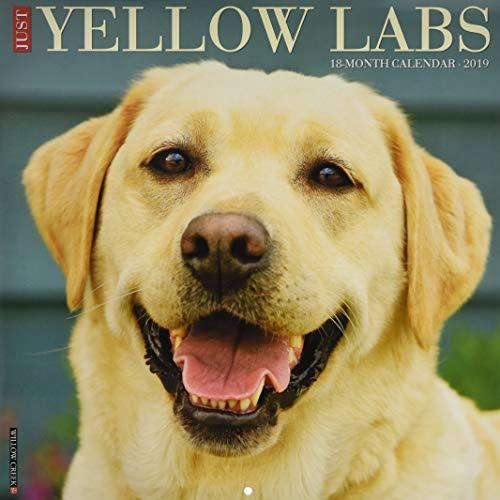 Just Yellow Labs 2019 Wall Calendar