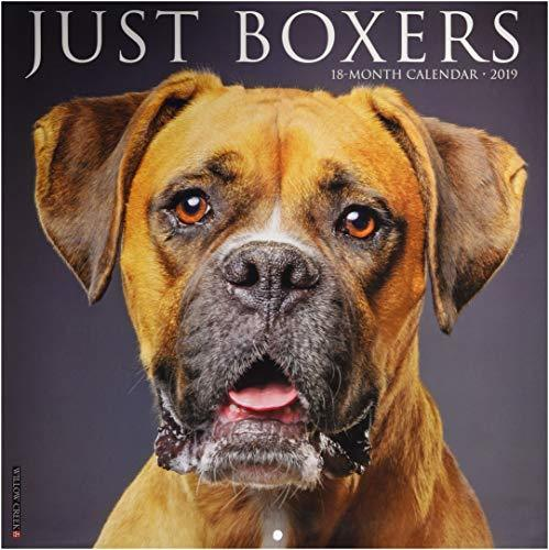 Just Boxers 2019 Wall Calendar
