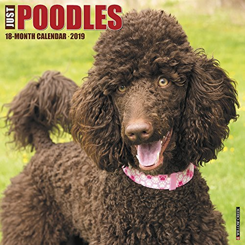 Just Poodles 2019 Wall Calendar