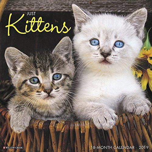 Just Kittens 2019 Wall Calendar