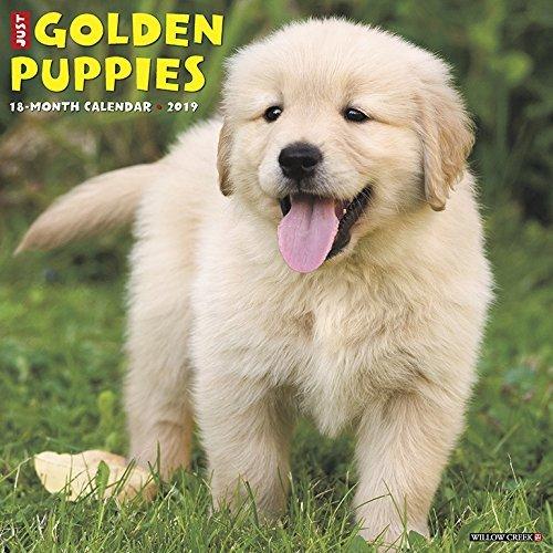 Just Golden Puppies 2019 Wall Calendar