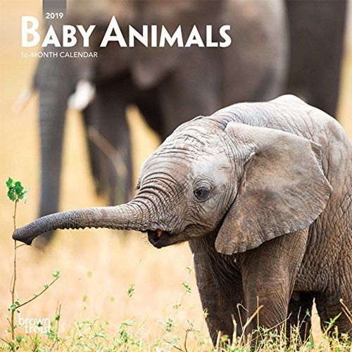 Baby Animals 2019 Mini Wall Calendar