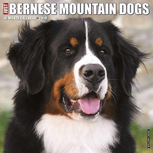 Just Bernese Mountain Dog 2019 Wall Calendar