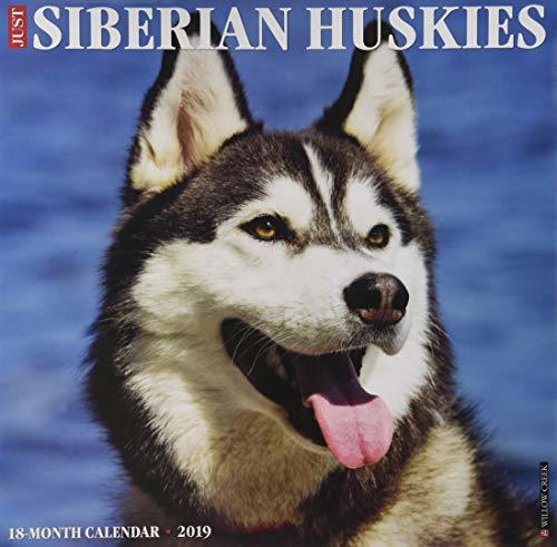 Just Siberian Huskies 2019 Wall Calendar