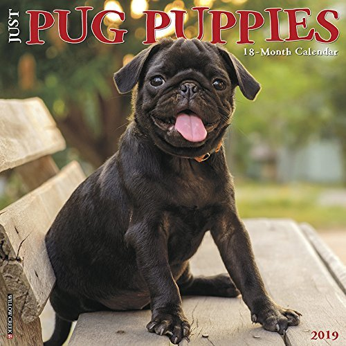 Just Pug Puppies 2019 Wall Calendar