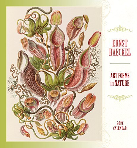 Ernst Haeckel Art Forms in Nature 2019 Wall Calendar