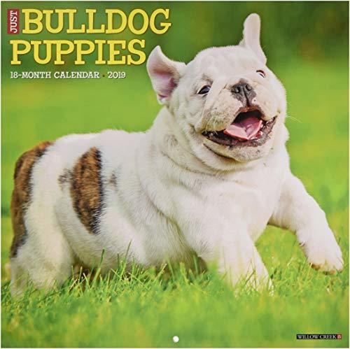 Just Bulldog Puppies 2019 Wall Calendar