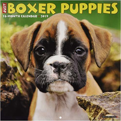 Just Boxer Puppies 2019 Wall Calendar