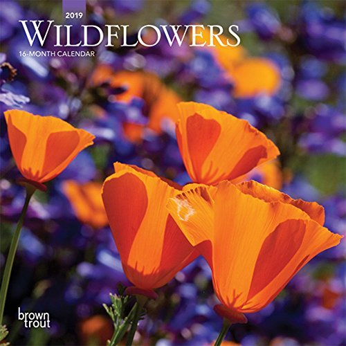 Wildflowers 2019 7 x 7 Inch Monthly Mini Wall Calendar, Flower Outdoor Plant