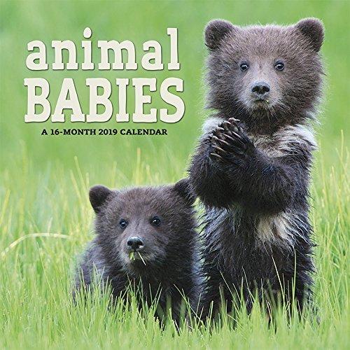 2019 Animal Babies Wall Calendar
