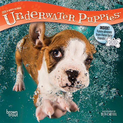 Underwater Puppies 2019 7 x 7 Inch Monthly Mini Wall Calendar, Pet Humor Dog