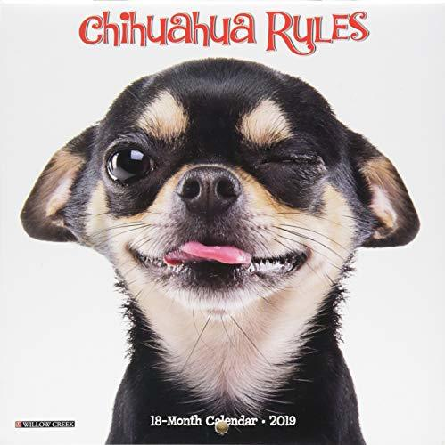 Chihuahua Rules Mini 2019 Wall Calendar