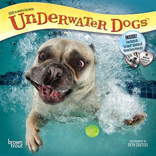 Underwater Dogs 2019 7 x 7 Inch Monthly Mini Wall Calendar, Pet Humor Puppy