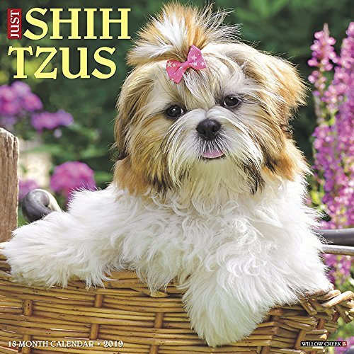 Just Shih Tzus 2019 Wall Calendar