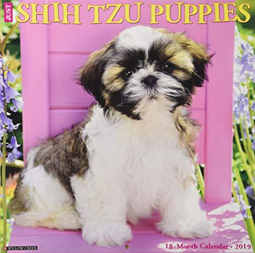 Just Shih Tzu Puppies 2019 Wall Calendar