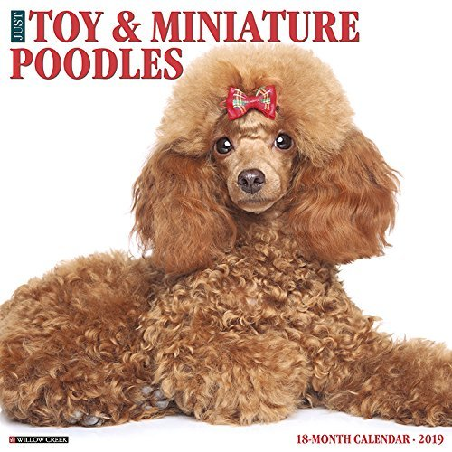 Just Toy & Miniature Poodles 2019 Wall Calendar