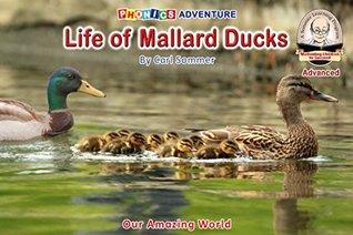 Life of Mallard Ducks (Advanced Non-Fiction Reader Book 14)