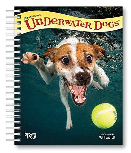 Underwater Dogs 2019 Diary